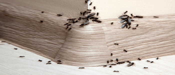 Affordable Ant Control Service