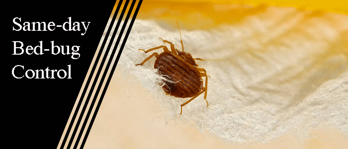 Same-Day Bed Bug Controllers