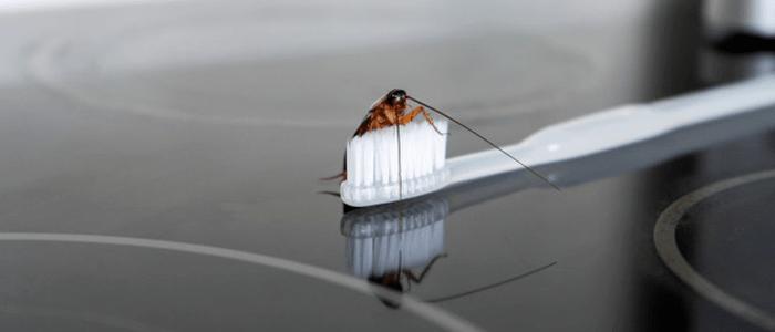 Cockroach Control Windsor