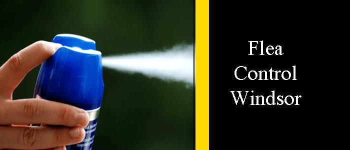 Flea Control Windsor